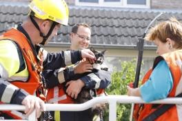 Verwaarloosde huisdieren gevonden bij reddingsactie om kat van dak te halen in Sambeek