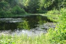 Amfibieën in Broekse Wielen: zijn ze er nog, na twee droge jaren? Land van Cuijk
